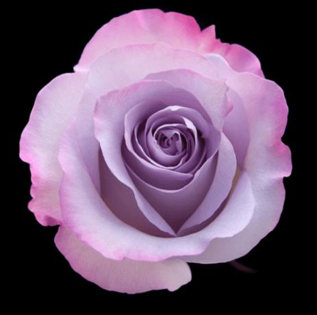 Flower Songs Bring Joy