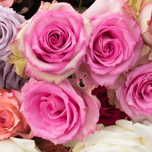 Rose Color Meaning How To Choose The Best Color Magnaflor