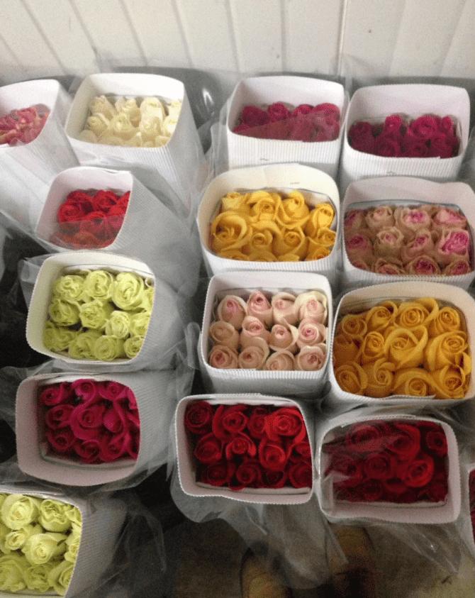 Cheap Roses In Bulk