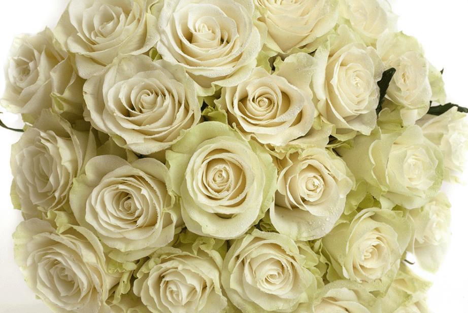 Wedding Roses Mondial
