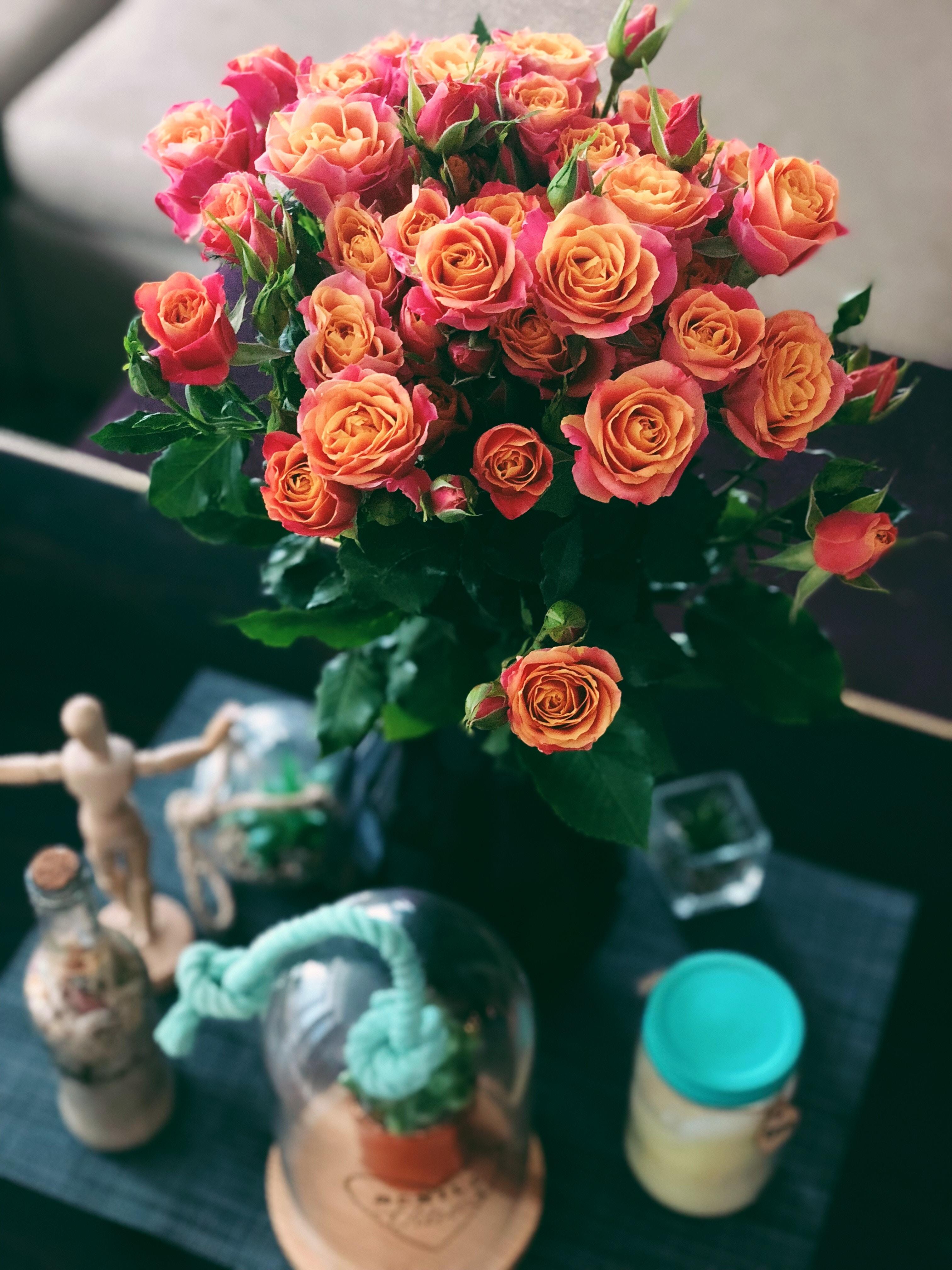 Roses Heal And Illuminate Life