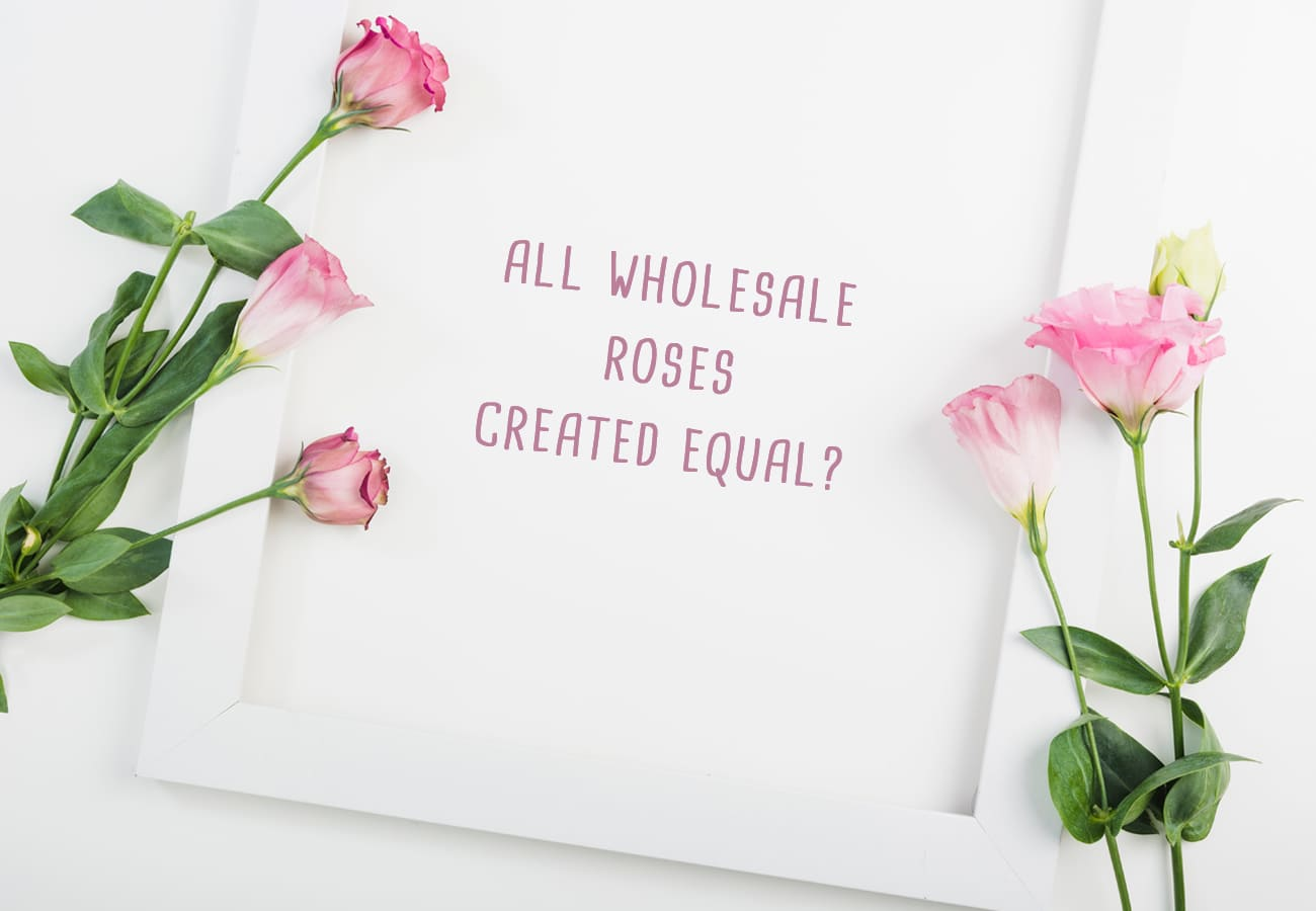 All Wholesale Roses Created Equal?