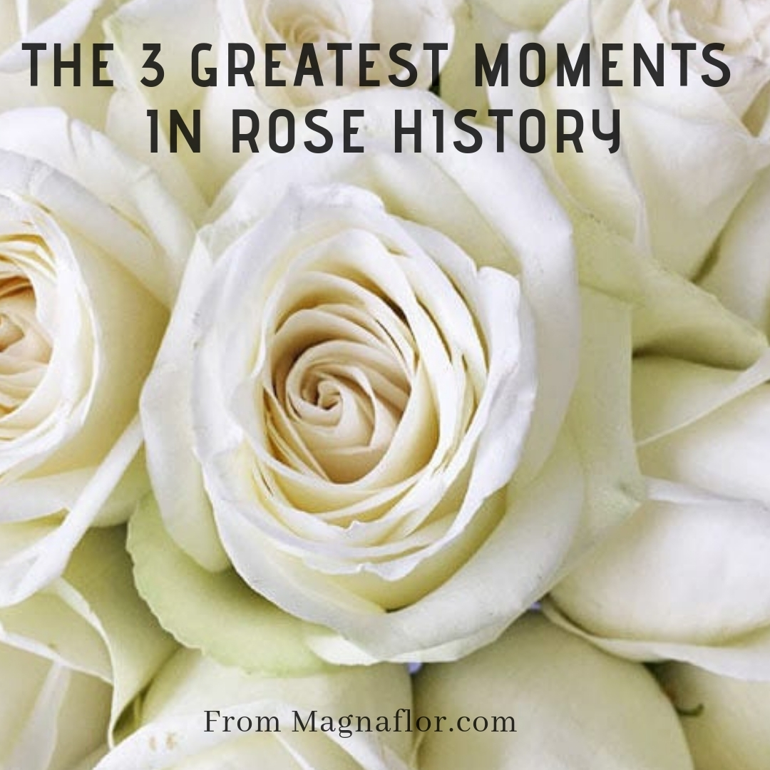 The 3 Greatest Moments In Rose History – White Roses