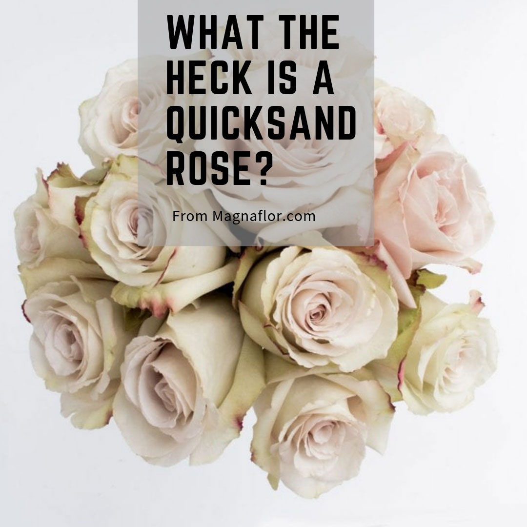What The Heck Is A Quicksand Rose?