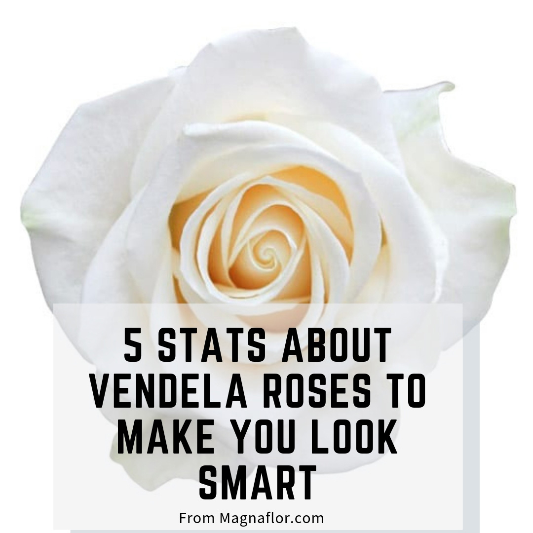 5 Stats About Vendela Roses To Make You Look Smart Around The Water Cooler