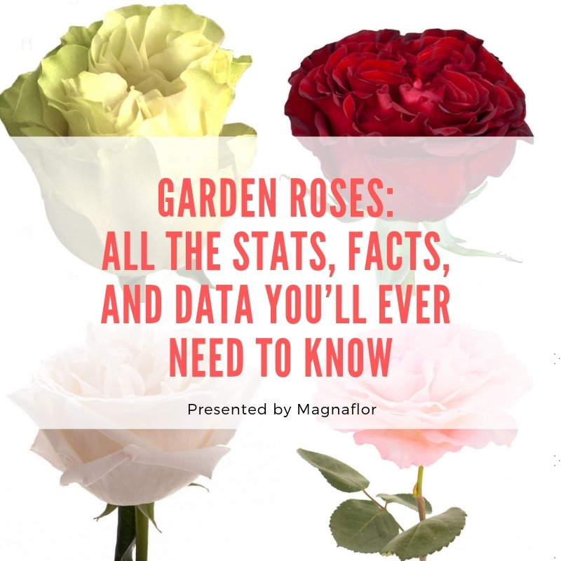 Garden Roses: All The Stats, Facts, And Data You'll Ever Need To Know