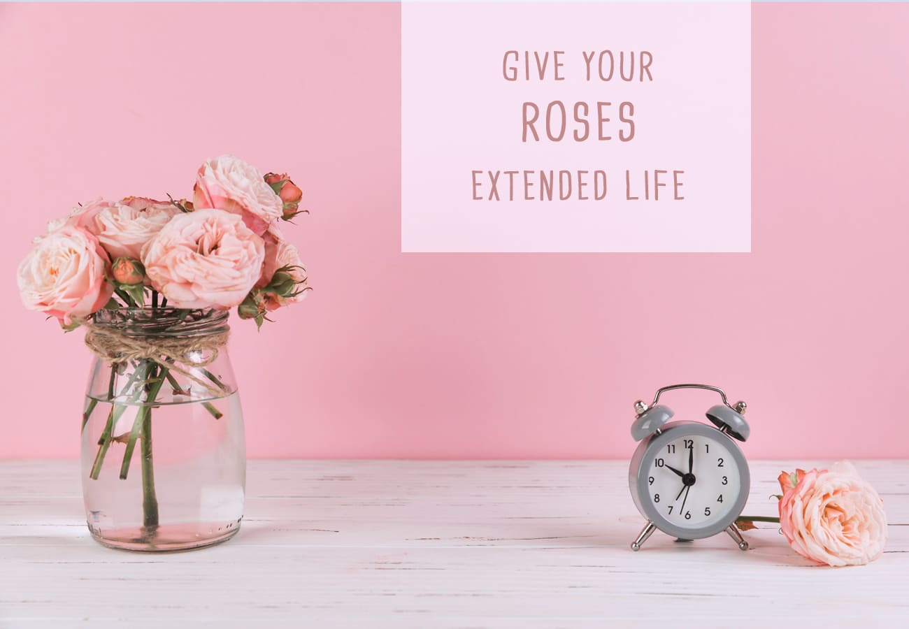 Give Your Roses Extended Life