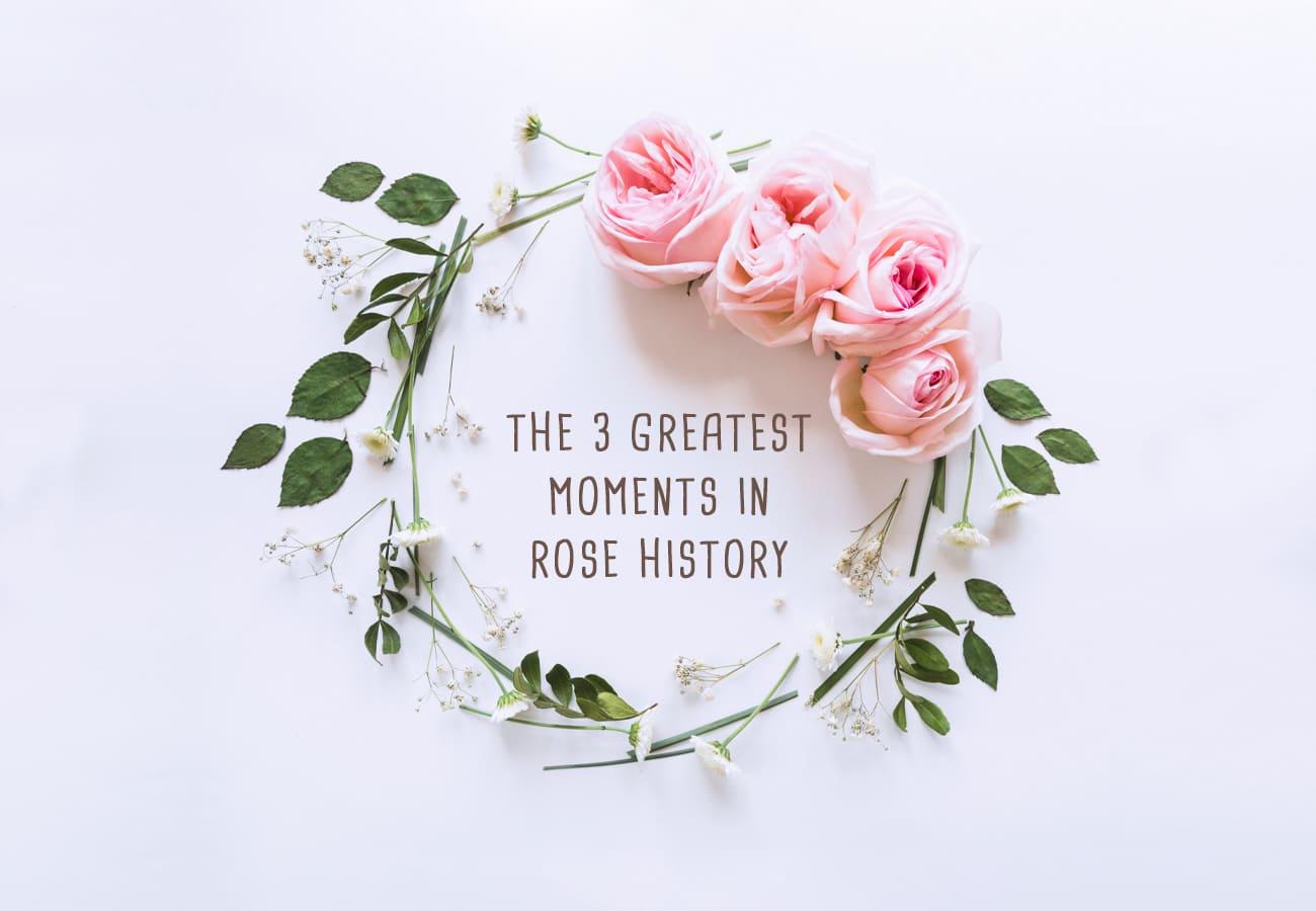 PORTADA ROSE HISTORY