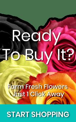 Shop Magnaflor Roses Banner