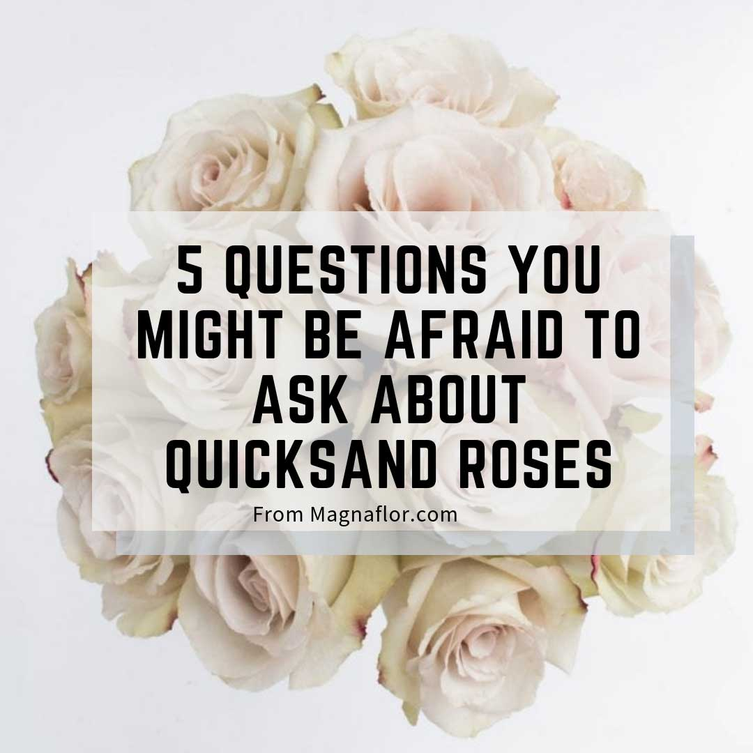 5 Questions You Might Be Afraid To Ask About Quicksand Roses