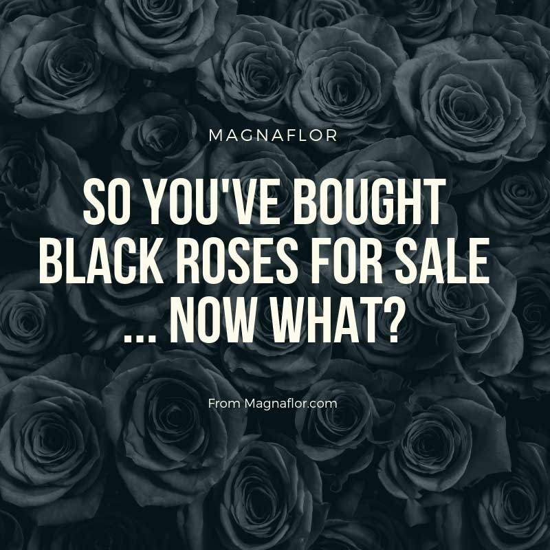 So You've Bought Black Roses For Sale … Now What?